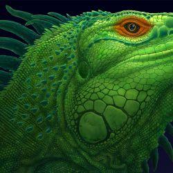 Iguana MORE INFO