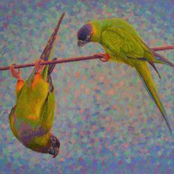 parrots-antics MORE INFO