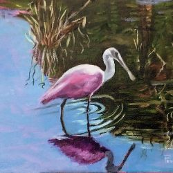 Roseate Spoonbill MORE INFO