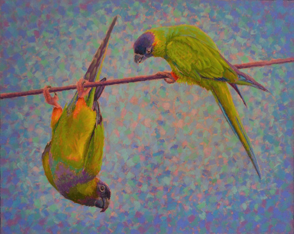 parrots-antics